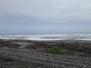 04.28 Greymouth und Paparoa NP (Pancake Rocks, Blowholes, Truman Track, Cape Foulwind)